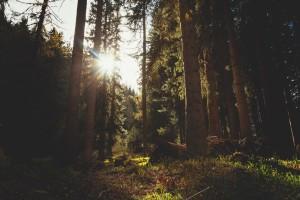 Protecting the Environment Maksiwa 1